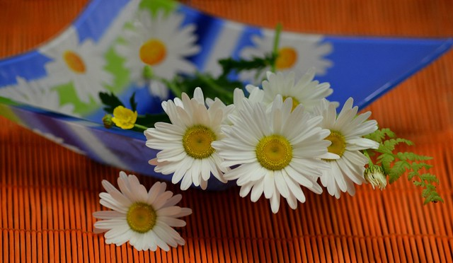 Обои макро, ромашки, букетик картинки на рабочий стол, раздел цветы - скачать