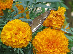 IMG_0107 (mohandep) Tags: iimb events birding nature wildlife flowers insects butterflies trees plants ugs aircraft