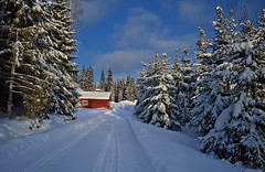 Memories of snowy winter 2019. Finland. (L.Lahtinen (nature photography)) Tags: winter finland 2019 snow landscape nikon nikond3200 landscapephotography snowy snowcoveredtrees wood road suomi talvi talvimaisema winterwonderland nature naturephotography weather redhouse beauty beautyinnature maisema