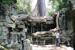 Angkor_Ta Prohm_2014_27