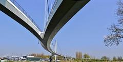Nescio Bridge (Hans Veuger) Tags: nederland thenetherlands amsterdam kanaaldijk ijburg amsterdamrijnkanaal palingbrug suspensionbridge nesciobrug nesciobridge stitch nikon b700 coolpix nederlandvandaag unlimitedphotos twop diemerpark diemerzeedijk jimeyre