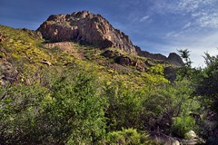 Greens and Yellows Leading up a Mountainside (Big Bend National Park) (thor_mark ) Tags: nikond800e day4 triptobigbendnationalpark bigbendnationalpark windowtrail pulliampeak lookingeast chisosmountains capturenx2edited colorefexpro intermountainwest southwestbasinsandranges transpecostexasranges bigbendranges hiketo​thewindow ​thewindowtrail​ desert desertlandscape desertplantlife desertmountainlandscape outside nature landscape mountains mountainsindistance mountainsoffindistance mountainside sunny blueskieswithclouds trees hillsideoftrees chihuahuandesert usbiospherereserve rollinghillsides volcanicpast cloudwisps portfolio project365 tx unitedstates