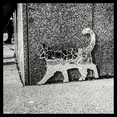 Cat on Fomapan 200 (rudeskull) Tags: film rolleiflex zeiss tessar fomapan200 fomapan xtol kodak grain iso200 blackandwithe animal cat katze spiegelung spiegel mirror street berlin arr blanconegro sw schwarzweis tier