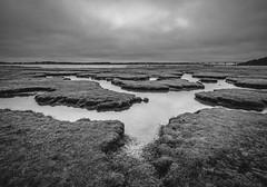 Marshland at the fjord (Brian Dalgaard Mikkelsen) Tags: fujifilm blackandwhite bw nature landscape fjord bridge sallingsundbroen denmark morsø marshland marsh