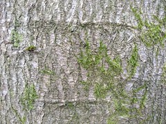 Disappearing initials (brightasafig) Tags: trees initials death moss poem leaf