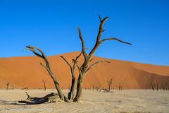 Dead Vlei (Julian Cook Photography) Tags: africa camelthorntree deadvlei desert giraffethorntree namibdesert namibnaukluftnationalpark namibia sand sanddunes trees vachelliaerioloba