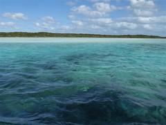 Half Moon Cay, Bahamas, Day 4 -- Caribbean Cruise Vacation, Bay Nature Cruise, Landscape (Mary Warren 12.9+ Million Views) Tags: bahamas halfmooncay nature flora plants green hollandamerica cruise vacation bay water sky clouds