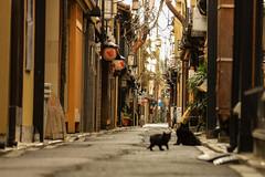 冬の京都 02 (sunuq) Tags: japan 日本 canon eos 5dsr ペッツバール ロモグラフィ lomography zenit petzval ボケ bokeh 先斗町 ネコ 黒猫 cat