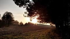 Sunset (cutebeets) Tags: sunshine sun trees tree field poland polska pole drzewa zachód słońca słońce sunset