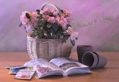 Dreaming of Summer (Lindaw9) Tags: still life azaleas gardening book basket plant plantablepots seeds texture