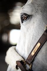 My light (theninfea) Tags: horse horses riding eye eyes animal nature equestrian equine 50mm bokeh