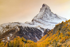 Matterhorn (Zermatt, Switzerland) - Autumn Colors and Winter Atmosphere. (baddoguy) Tags: autumn leaf color beauty in nature blue clear sky cold temperature image copy space dawn europe european alps famous place focus on foreground forest gold colored horizontal horned international landmark landscape scenery local matterhorn national no people outdoors photography pinaceae pine tree woodland pinnacle peak pyramid shape scenics snow snowcapped mountain swiss switzerland tip tourism town travel destinations valais canton zermatt