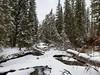 2019-03-13_04-39-52 (pauline.h71) Tags: banff forest bowriver