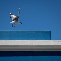 fly~by~blues (gil walker) Tags: bokaap