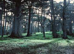 Crocker grove (abe.ammar.n) Tags: