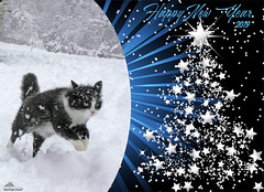 ❅ Joyful Explosion For 2019 ❅ (Xena*best friend*) Tags: zivadavid zd happyyear2019 happy2019 cats whiskers feline katzen gatto gato chats furry fur pussycat feral tiger pets kittens kitty animals piedmontitaly piemonte canoneos760d italy wood woods wildanimals wild paws calico markings ©allrightsreserved purr digitalrebelt6s efs18135mm flickr outdoor animal pet photo nature winter cold snow joy happiness explosionofjoy joyexplosion happynewyear
