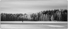 Skiløper på Nordbytjernet (cropped b&w) (Krogen) Tags: norge norway norwegen akershus romerike ullensaker nordbytjernet vinter winter krogen olympusomd