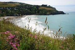 Godley Head (Like_the_Grand_Canyon) Tags: new zealand neuseeland kiwi christchurch vacation travel holiday december 2018