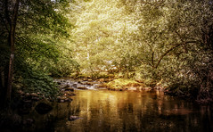 sun soaked rothay (10000 wishes) Tags: river lakedistrict woods trees beauty scenic landscape reflections naturephotography countryside