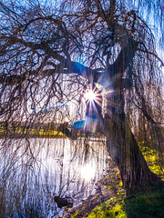 Weeping Willow sunspot afternoon riverside view (strangesimon) Tags: spring winter willow tree sunrays light water