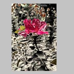 Aldrin_Iglesias_2019_18 (aldrin_iglesias) Tags: rioacimamg brasil brazil flor flower