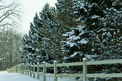 The Fence at Kendrick Woods (ramseybuckeye) Tags: fence snow winter kendrick woods allen county ohio pine trees wooden pentax art life