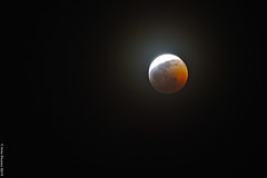 eclipse_2019_2 (acritely) Tags: bloodmoon 2019 eclipse usa wolfmoon