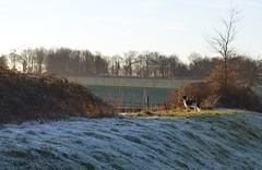 a cold start to the day (Jeffxyz) Tags: spaniel springer english