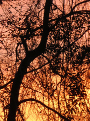 Branches In Fading Sunlight. (dccradio) Tags: lumberton nc northcarolina robesoncounty outdoor outdoors outside nature natural sunset evening eveningsky february winter goodevening saturday saturdaynight saturdayevening canon powershot elph 520hs tree trees treebranch treebranches branch branches treelimb treelimbs beauty scenic woods forest wooded settingsun eveningcolors daylightends eveningbegins silhouette