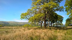Ynys hir (Cal Killikelly) Tags: ynys hir landscape midwales snowdonianationalpark nature reseve trees grass mountains wildlife summer dyfi estuary