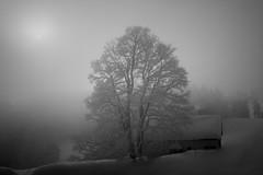 Foggy Day (qaxwkhlm1) Tags: landscape tree bavaria canon stimmung mood saison season snow schnee nebel foggy winter