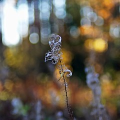 Happy Valentine's Day (Stefano Rugolo) Tags: stefanorugolo pentax k5 pentaxk5 kmount smcpentaxm100mmf28 ricohimaging happyvalentinesday bokeh forest depthoffield autumn 2018 nature manualfocuslens manualfocus manual vintagelens