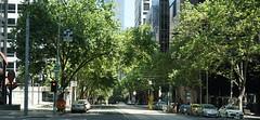 The leafy end of town (spelio) Tags: australia tasmania tassie tasi jan 2019 travel edit tas1901 vic melbourne hotels transport