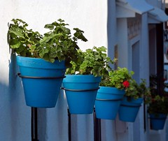Mijas (lauracastillo5) Tags: pots blue flowers garden red plant nature outdoors travel andalusia street malaga flower white
