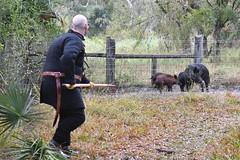EEF_7687 (efusco) Tags: boar medieval spear brambleschoolearteofthehunt bramble schoole military arts academy florida ferel hog pig