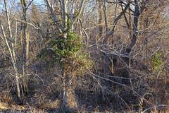 Woodsy Winter Morning (Modkuse) Tags: woods forest nature natural landscape intimatelandscape art artphotography fineartphotography fineart photoart morning sunnymorning fujifilm fujifilmxt2 xt2 xf1024mmf4rois fujinon fujinonxf1024mmf4rois