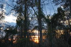 Last Bit Of Sun. (dccradio) Tags: lumberton nc northcarolina robesoncounty outdoor outdoors outside nature natural sky tree trees woods wooded forest march monday spring springtime evening mondayevening goodevening nikon d40 dslr settingsun sunset sunlight sun sunshine cloud clouds