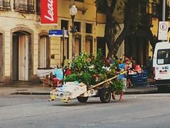 um jardim móvel (lucia yunes) Tags: rua cenaderua fotoderua fotografiaderua trabalhador trabalhoderua carregador streetvendor streetshot streetphotography streetlife work streetwork motoz3play luciayunes hardwork vendedores vendedoresderua