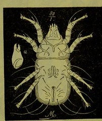 This image is taken from Page 102 of Les acariens parasites [electronic resource] (Medical Heritage Library, Inc.) Tags: acari arachnid vectors wellcomelibrary ukmhl medicalheritagelibrary europeanlibraries date1892 idb20406186