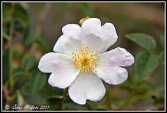 Flores (jesusmarialeon) Tags: flores