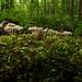 slug-695 (jmunt) Tags: microlandscape slug moss landscape