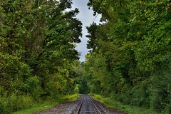 A Path of Life Would Lead Me to the Woods and Forest (Cuyahoga Valley National Park)