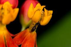 Flowers of Burgers Zoo (The LakeSide) Tags: macro nikon r1c1 d7100 netherlands flower