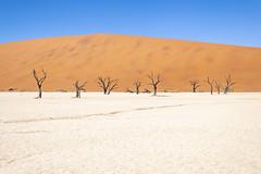 _RJS4684 (rjsnyc2) Tags: 2019 africa d850 desert dunes landscape namibia nikon outdoors photography remoteyear richardsilver richardsilverphoto safari sand sanddune travel travelphotographer animal camping nature tent trees wildlife