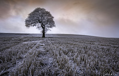 Cold Sun ([CamCam]) Tags: sun sunrise rise winter cold frost frosty yorkshire field bare