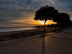 Cambrils beach sunset (muntsa-joan-color) Tags: sunset beach atardecer catalonia playa paseo sea sky sol sun streetphotography street streetphoto seascape sombras tree trees