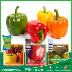 dolmabiber (Profert Gübre) Tags: dolmabiber bibre biber sera seracılık damlama yandal sulama sebze sebzecilik seed