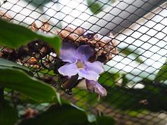 beneath the roof (1elf12) Tags: netz net flower blüte blossom blume bremen germany deutschland botanika