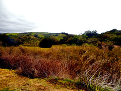 The Edge of O'Neill (EmperorNorton47) Tags: missionviejo california photo digital winter brush coppice chaparral foothills overcast