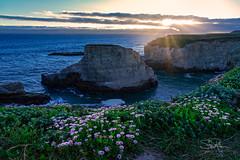 Shark Fin Sunset (TierraCosmos) Tags: sharkfincove rock seascape wildflowers sunset coast ocean california davenport